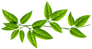 Green_Leaves_PNG_Image