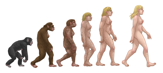 Female_human_evolution
