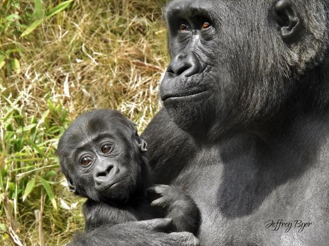 MY BABY (Mar 2019 Columbia Zoo, SC)